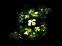 Four leafed clover on black