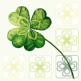 Four Leafed Clovers