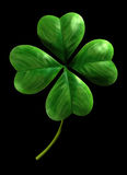 Four leafed shamrock Royalty Free Stock Photos