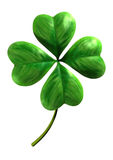Four leafed shamrock Stock Photography