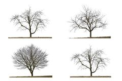Four leafless trees in winter stock photos
