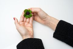 Four leave clover in female hands royalty free stock photo