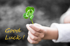 Four-Leaved Clover in a Child Hand - Good Luck Stock Photos
