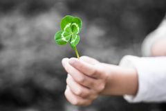 Four-Leaved Clover in a Child Hand Royalty Free Stock Photos