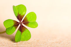 Four-leaved cloverleaf. Green four-leaved cloverleaf with copy space Stock Photography