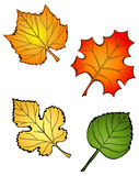 Four Leaves. Four different leaves, spring and fall Stock Photo
