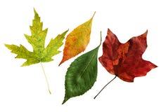 Four Leaves Stock Photos