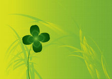 Four leaves clover Royalty Free Stock Images