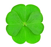 Four leaves clover Stock Photos