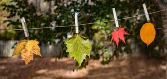 Four leaves hanging with clothes pins outside in the sunshine on a clothes line. royalty free stock image