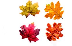 Four Leaves Isolated on White Background Stock Photography