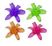 Four Lillies Royalty Free Stock Photo