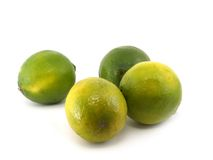 Four limes Stock Image