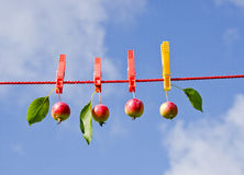 Four little apples on clothes-line Royalty Free Stock Photography