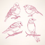 Four little birds Royalty Free Stock Images