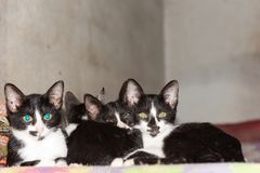 Four Little black kittens sleeping together on bed looking at th Stock Photos