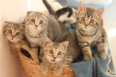 Four little cats Stock Photos