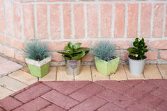 Four little green plants. Four aligned little plants in front of brick wall royalty free stock image