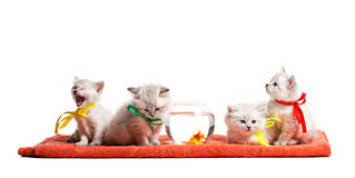Four little kitten and goldfish Royalty Free Stock Image