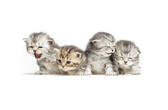 Four little kitten Stock Photos