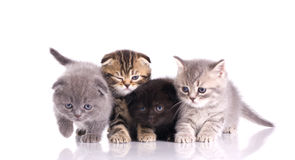 Four little  kittens Stock Photo