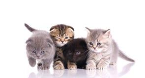 Four little  kittens Stock Photo
