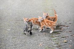 Four little kittens are waiting for their mom Stock Photo