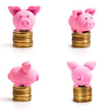 Four little pink pigs on coins Stock Photography