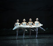 Free Four Little Swan-Classic Black And White-ballet Swan Lake Stock Images - 48877004