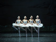 Four little swan-The Swan Lakeside-ballet Swan Lake Royalty Free Stock Photography