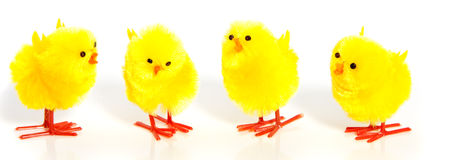 Four little yellow chicks Royalty Free Stock Photography