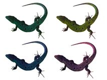 Four lizards. Isolated on white background stock photos