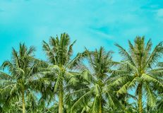 Four lush palm tree tops royalty free stock image