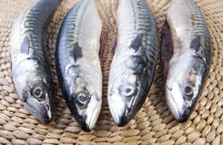 Four mackerels fish over rattan surface Royalty Free Stock Image