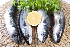 Four mackerels fish over rattan surface Stock Images