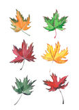 Four magnificent maple leaf watercolor hand sketch Stock Image