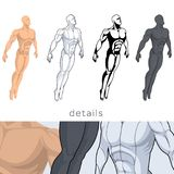 4 male anatomical silhouettes. Four male anatomical silhouettes. Body, shadows and muscles. Four male bodies in different styles and colors Stock Image