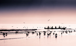 Four man Canoe coming in to beach Royalty Free Stock Photo