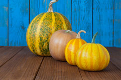 Four many-coloured pumpkins in line for halloween. Decoration Royalty Free Stock Images