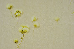 Four many flower gold pictures with four white bac Stock Image