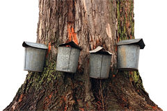 Old Fashioned Maple Sap Buckets Royalty Free Stock Photography