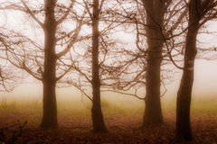 Four massive solitary trees Stock Images