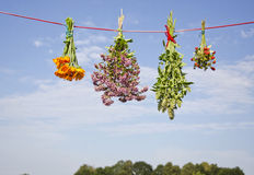 Four medical herb flowers bunch on string Stock Photography