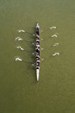 Four men rowing on Danube river Stock Photography