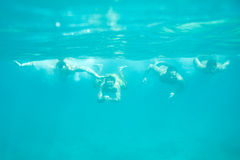 Four men swimming underwater royalty free stock photography