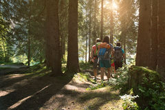 Four man and woman walking along hiking trail path in forest woods during sunny day. Group of friends people summer. Four men and women walking along hiking royalty free stock images