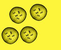 Four microbe yellow Stock Images