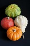 Four mini pumpkins. On black background Royalty Free Stock Photo
