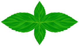 Four mint leaves illustration Stock Images