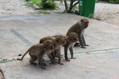 Cute baby monkeys in a row on monkey island stock photos